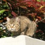 penelope, la gatta
