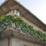 Bocale(Rc): uva sul terrazzino - località Campoli