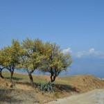Pellaro(Rc): mandorli sulle colline